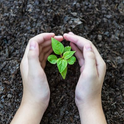 Man hand is planting the plant to the soil. Ecology Concept